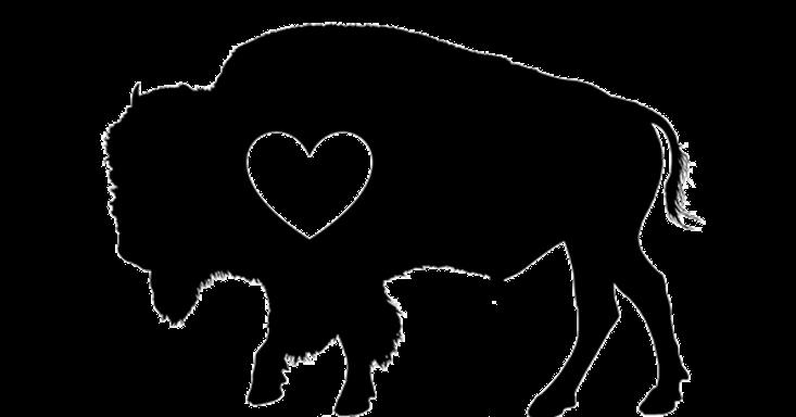 Bison Alone